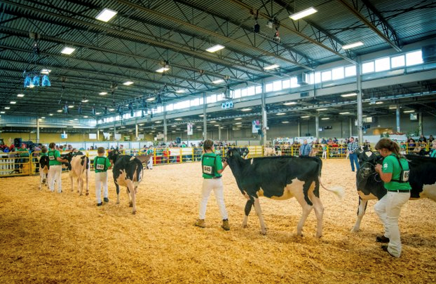 4H Dairy Competition