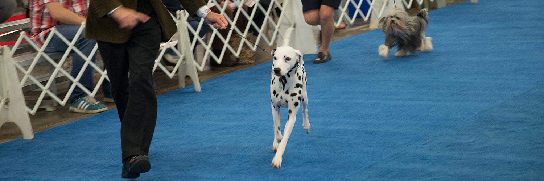 Elgin County Kennel Club Dog Show