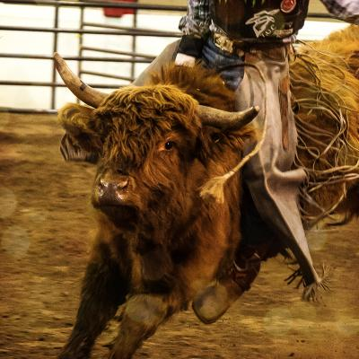 Rawhide Rodeo