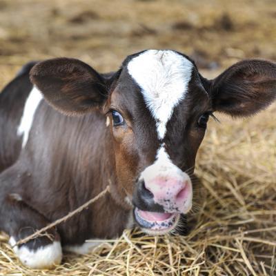 Dairy Congress junior