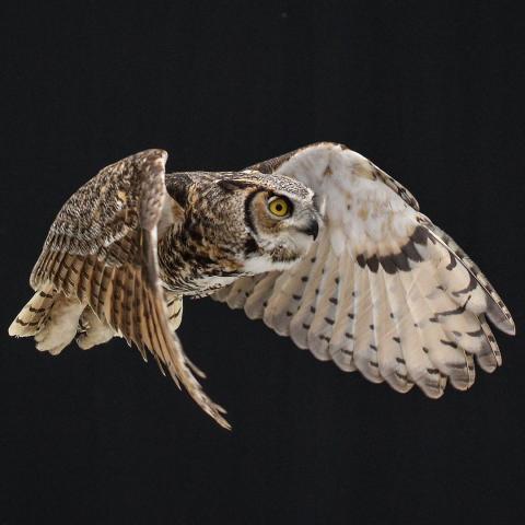 Birds of Prey Feature Image