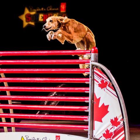 Super Dogs Summary Image