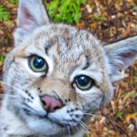 soper creek wildlife rescue feature image
