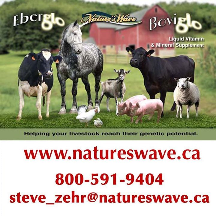 Nature's Wave Logo